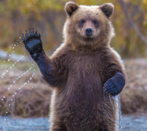 illustration d'un ours pour le bear market